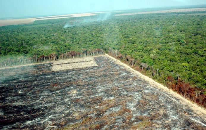 'Steeds meer delen van Brazilië komen beschikbaar om al die bomen te planten. Het cynisme onder burgers voor zulke oplossingen zal er niet minder om worden.'