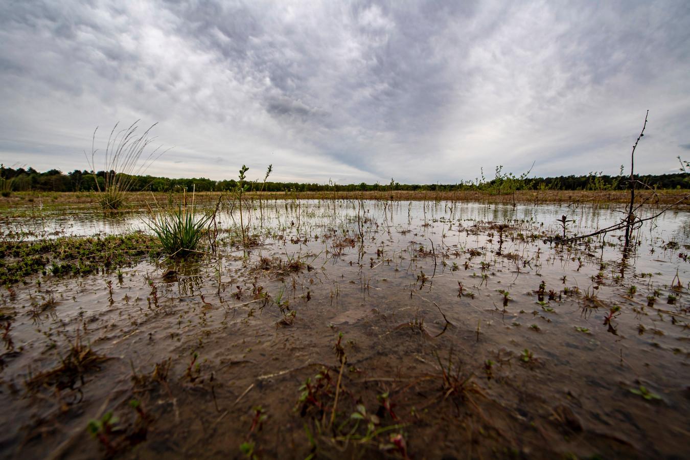 Voorjaar 2021: het waterpeil in de Kleine Meer in Ossendrecht zakte na een aantal droge zomers op rij dramatisch.