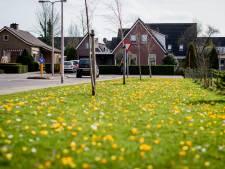 Haaksbergen schiet insecten te hulp:  minder maaien en meer inzaaien bloemzaden