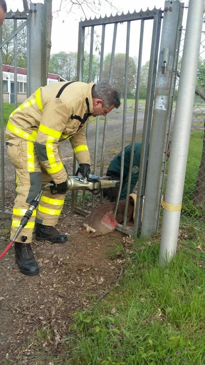 De ree werd gered door de brandweer.