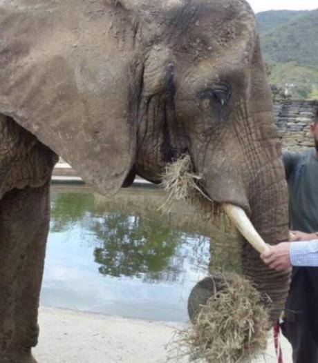 Uitgemergelde olifant staat symbool voor crisis Venezuela