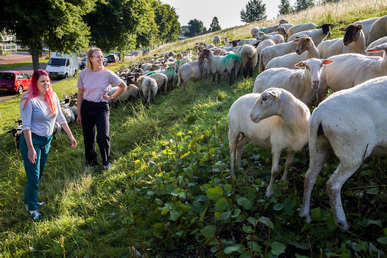De oprichters van het Hollands Wol Collectief, Janne de Hoop (links) en Mirthe Snoek, bedenken nieuwe toepassingen voor wol uit Nederland.