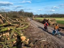 Geschokte reacties op neerhalen van honderd jaar oude eiken in Wolfheze: 'Misdadige bomenslachting'