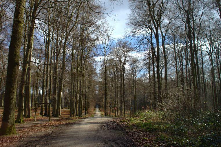 Unesco wil het Europees netwerk van authentieke beukenbossen uitbreiden.