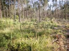 Droge zomer dramatisch voor natuur: sparren sterven af, kamsalamander met uitsterven bedreigd