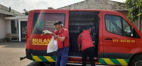 Zwanendrama is nog niet afgelopen, na dood vijf jonkies zijn ook pa en ma ernstig ziek