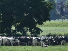 Buren is niet van plan om de veestapel zelf te gaan halveren