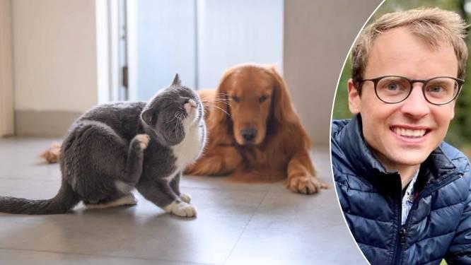 Na opschudding in VS over mogelijk giftige vlooienband: hoe bescherm je huisdieren het best nu het teken- en vlooienseizoen begonnen is?