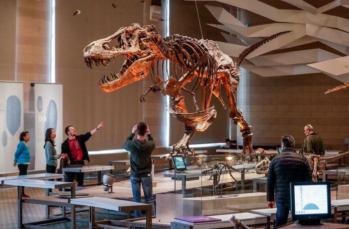 La reproduction du squelette d'un Tyrannosaurus rex au Muséum des sciences naturelles de Belgique, à Bruxelles.