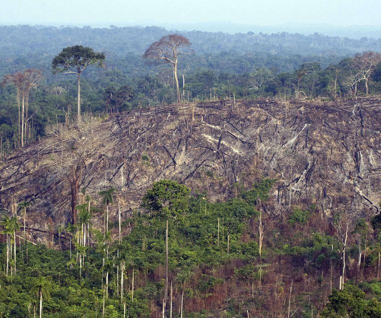 Een verwoest deel van het Amazone-regenwoud. Beeld AFP