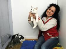 Dierenasiel Sliedrecht verbijsterd over gedumpte poezen en kittens