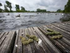 Poep, gekwaak en kaalgevreten grasvelden: Zutphen broedt nu toch op maatregelen tegen ganzenoverlast