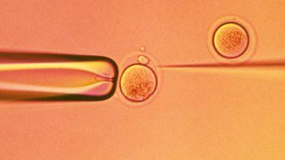 """""""Vrouwen in vruchtbaarheidsbehandeling moeten al beschermd worden tegen ontslag voor ze zwanger zijn"""""""
