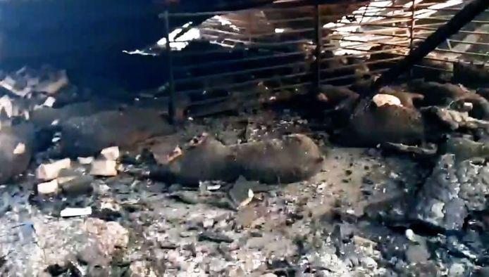 Bij de stalbrand kwamen 4.600 varkens om.