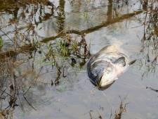 Plainte contre Nestlé après la mort de trois tonnes de poissons dans les Ardennes françaises