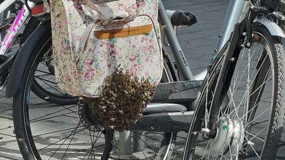 VIDEO. Duizenden bijen nestelen in fietstassen aan winkelcentrum
