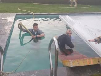 """Burgemeester van Sint-Laureins redt pony uit zwembad: """"Ik liet het beest rustig worden in mijn armen"""""""