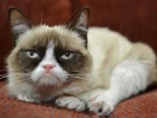 Internetfenomeen Grumpy Cat overleden