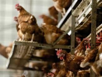 Haard van vogelgriep ontdekt in Franse Ardennen