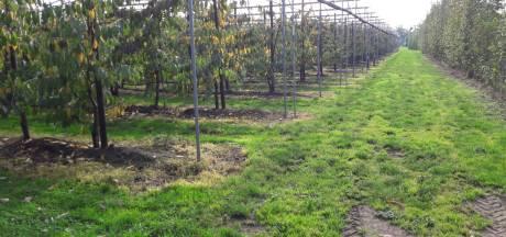 Bernheze voert spuitvrije zone in voor fruitteelt nabij woningen