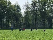 Werken als arbeidsmigrant in Nederland, wat komt erbij kijken?