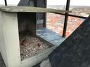 De nest van de slechtvalken dit jaar. Dit jaar zijn deze allemaal niet uitgekomen. Volgens Vogelwerkgroep Zutphen komt dit waarschijnlijk omdat de eieren niet bevrucht zijn.