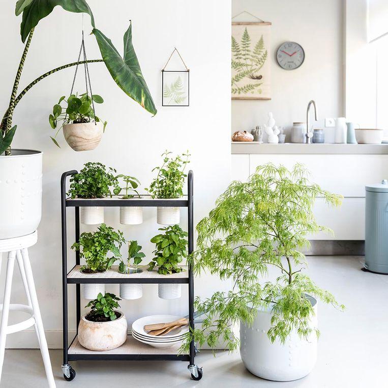 Áltijd groen in je keuken met deze zelfgemaakte kruidentrolley