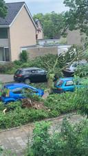 In de 67ste straat Weezenhof heeft één boom liefst drie eigenaren van auto's ongelukkig gemaakt. Of zijn het er zelfs vier?