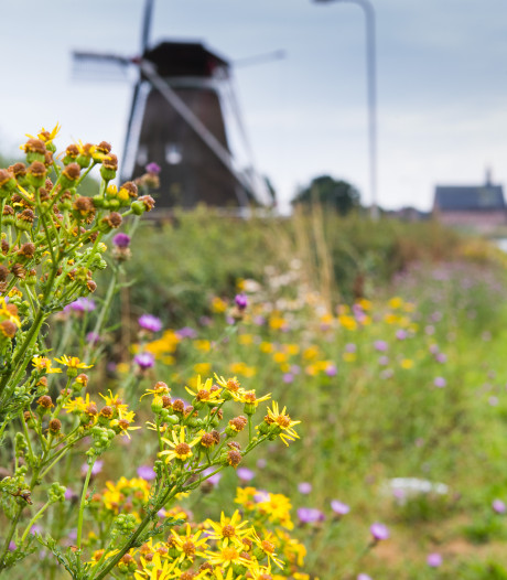 Zwolle zet het buitengebied in bloei (en dat is hard nodig)
