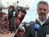Vijftien meter lange dode vinvis wordt ontleed en onderzocht