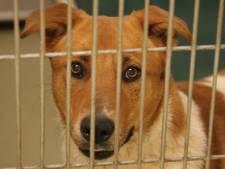 Omstreden puppyhandelaar De Meiboom in Diessen dicht na overtreden coronaregels