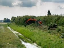 De Pelgrimsdijk in Zevenbergen weer een kale bedoening: bewoners boos