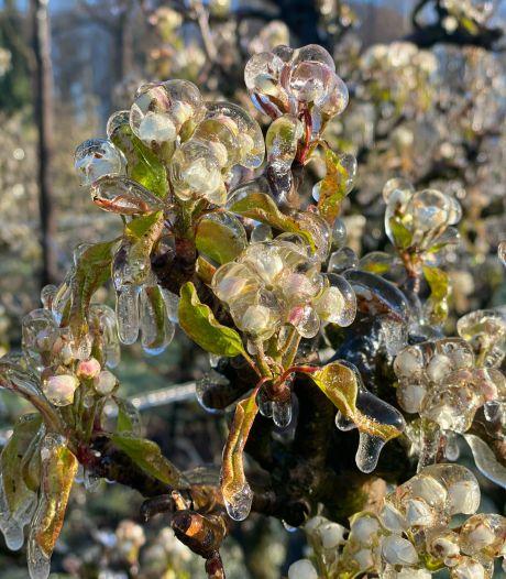 Fruittelers 's nachts hun bed uit om bloesem te besproeien tegen de vorst: 'eenzaam en toch ook spannend'