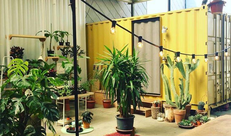 null Beeld Chambre Botanique