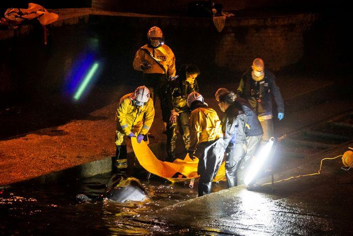 Bij de reddingsoperatie waren de brandweer en meerdere reddingsdiensten betrokken.