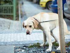 Seraing veut analyser les déjections canines pour retrouver et punir les propriétaires