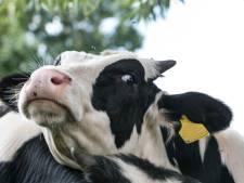 Près de 50 vaches volées à Florenville