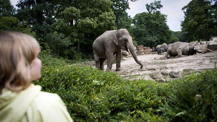 Het olifantenverblijf in Dierenpark Emmen. Beeld ANP
