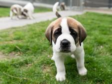 Puppy-snuffelstage bij Het Woolde in Hengelo
