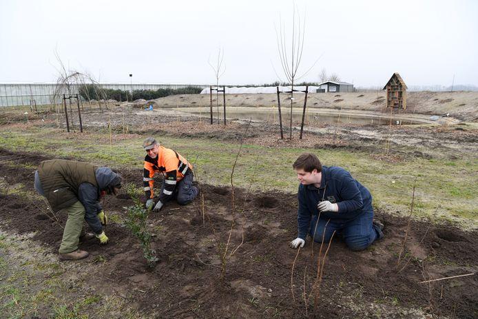 DONGEN,  Jan Stads / Pix4Profs.  Natuurlijk Tomaten (van Natuurlijk Henriette) is begonnen met de aanplant van een voedselbos van 4 hectare groot.
