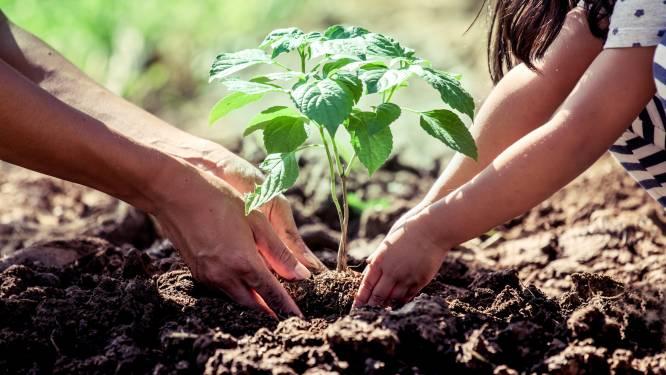 Stad plant hectare bos aan op drie locaties
