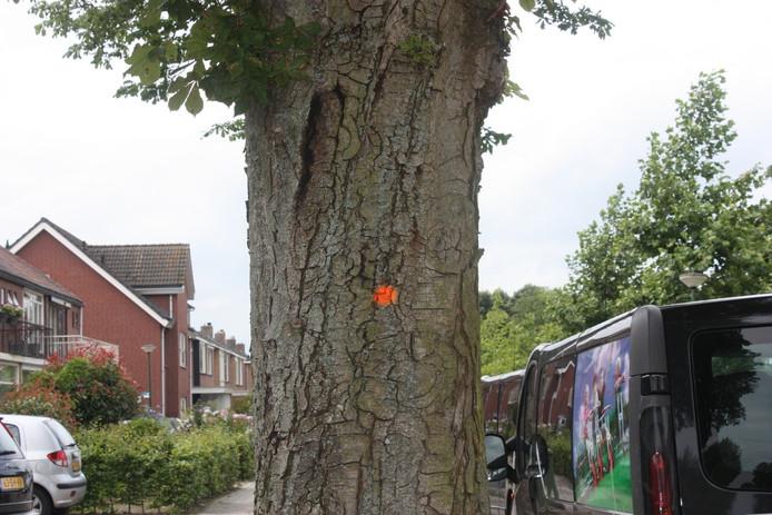 Aan de oranje stip is te zien dat de boom gerooid wordt.