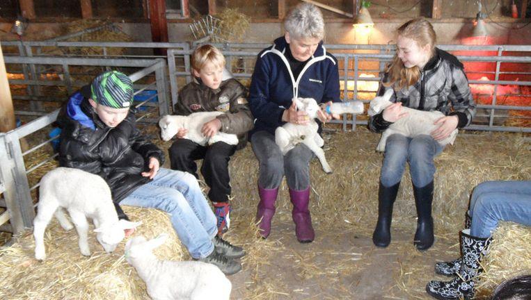 Lammetjes knuffelen op schapenboerderij Rozenhout. Foto: VVV Texel Beeld