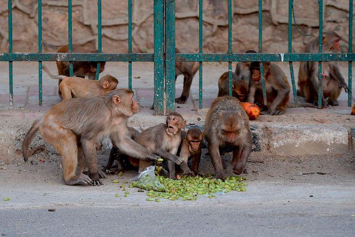 New Delhi (Inde), 10 avril