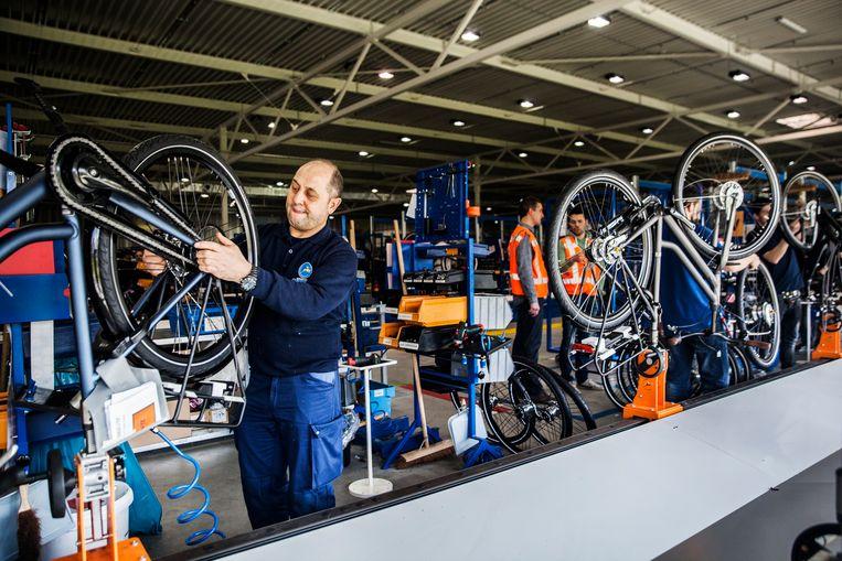 Dieren - Fabriek - Koninklijke Gazelle - fietsen - elektronische fiets Beeld Aurelie Geurts