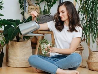 Hoe meer planten in je huis, hoe minder angst en stress je ervaart: hier shop je de leukste planten online