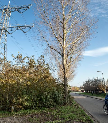 Onrust in Kroetenwijk Haagse Beemden over hoogspanningskabel: 'Een foeilelijk opstijgportaal'