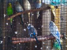 Storm maakt volière stuk, nu is Thijs vier parkieten kwijt: 'Iedereen leeft mee'