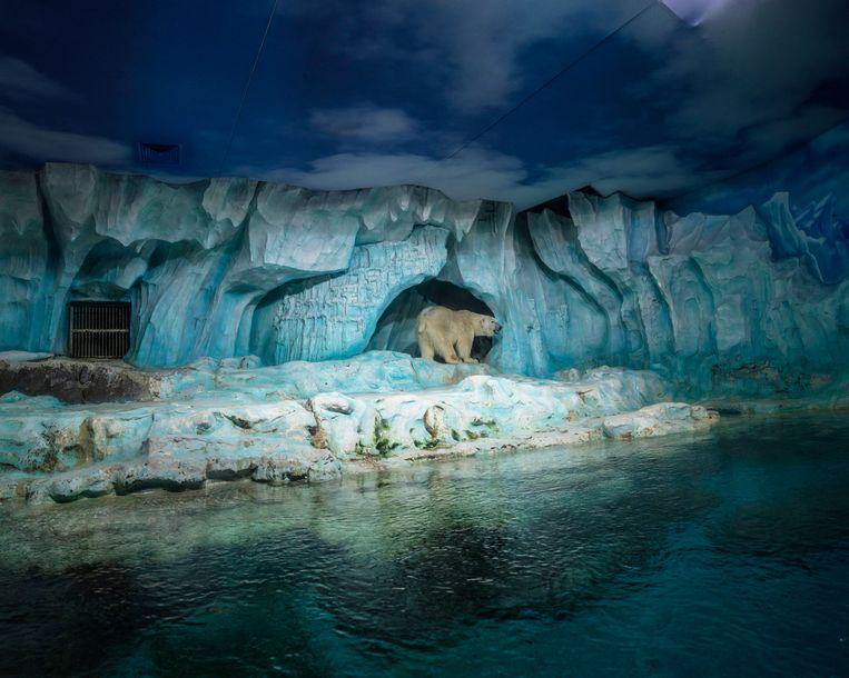 Qingdao Polar Ocean World, China. Beeld Sheng-Wen Lo