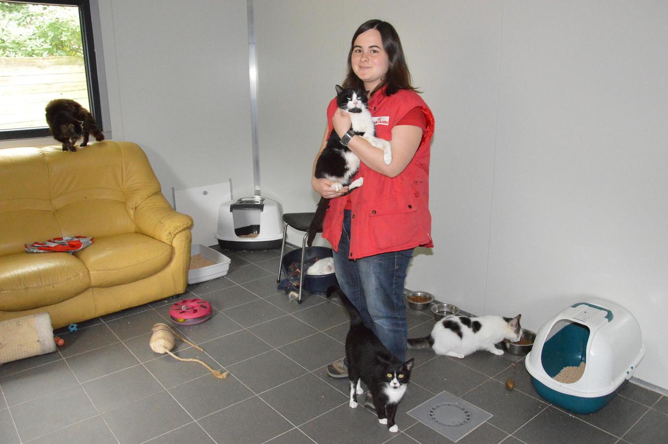 Katrien Reygaerts, die samen met mama Martine het dierenasiel in Denderwindeke uitbaat, in het huidige kattenverblijf.